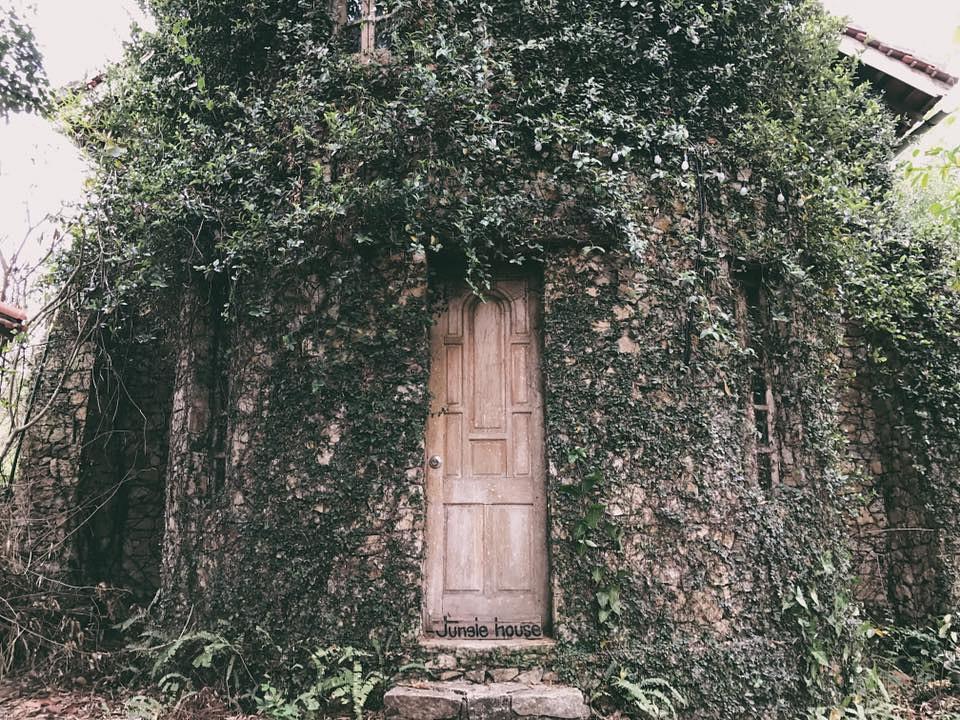 Jungle-House-3
