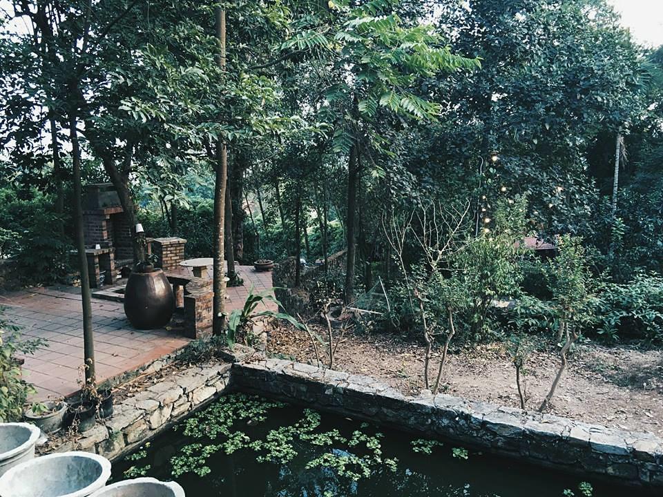 Jungle-House-8