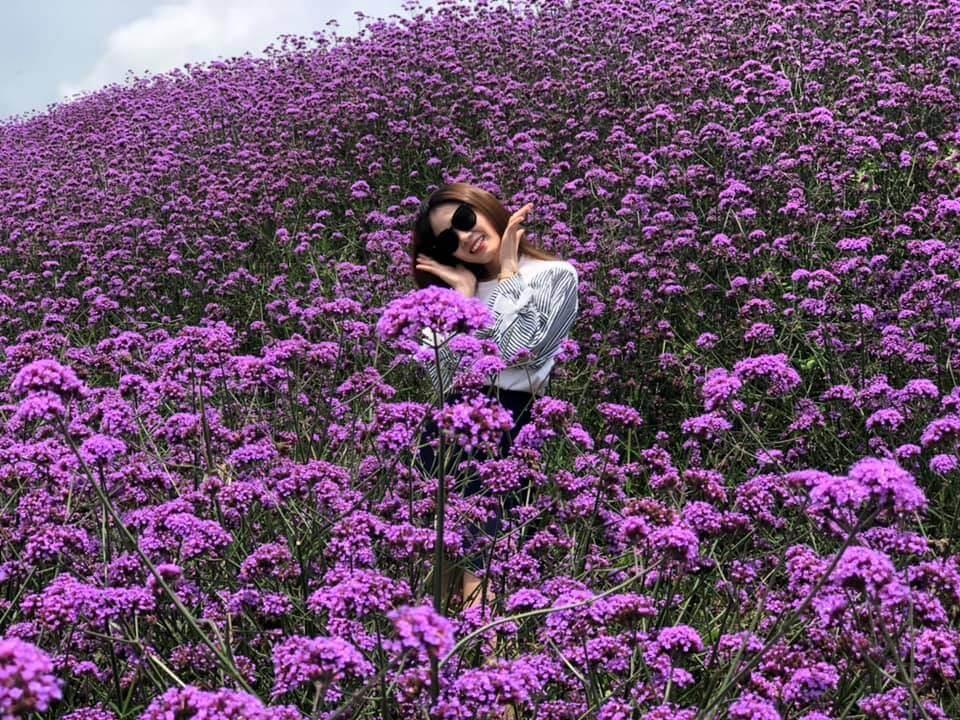 Trải nghiệm khoảnh khắc kì diệu trên cánh đồng hoa tím Sapa