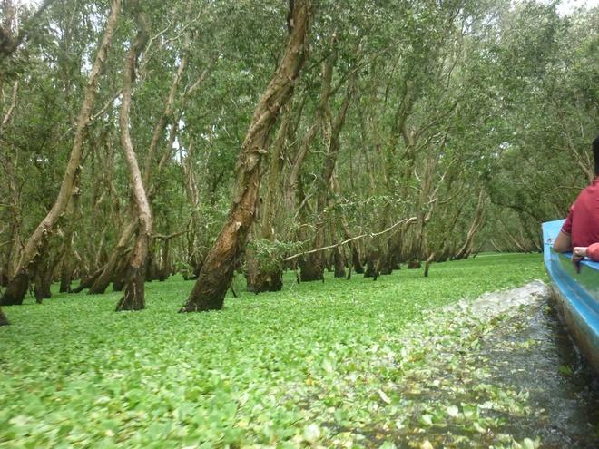 Đường vào rừng tràm Trà Sư