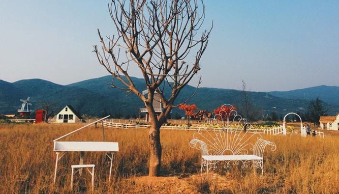 Kinh-nghiệm-đi-Thuận-Phước-Field-2